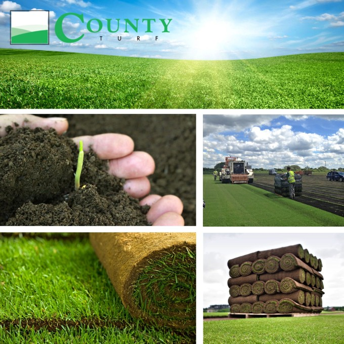County Turf Ltd